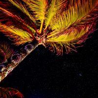 Palm tree sweater with stars