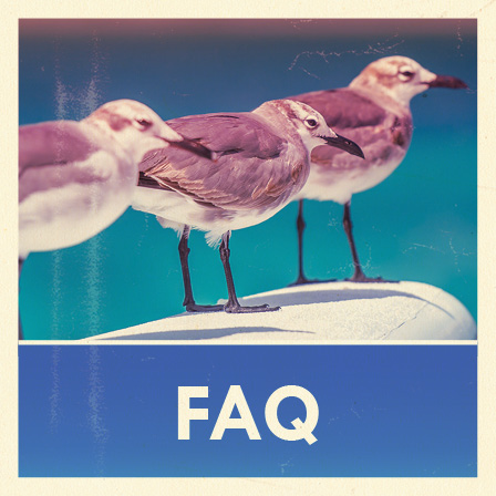 FAQ Seagulls at Caribbean